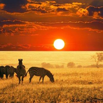 sud_africa_kruger_zebre_al_tramonto