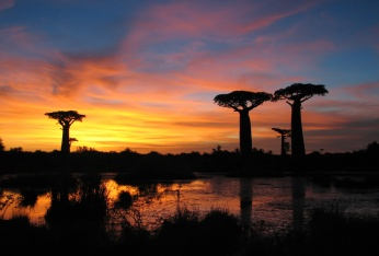 sunset_baobabs_madagascar