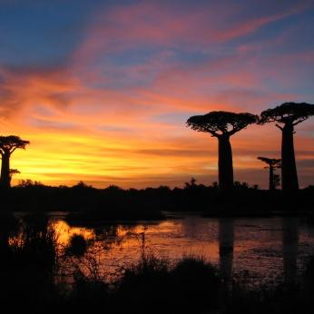 sunset_baobabs_madagascar