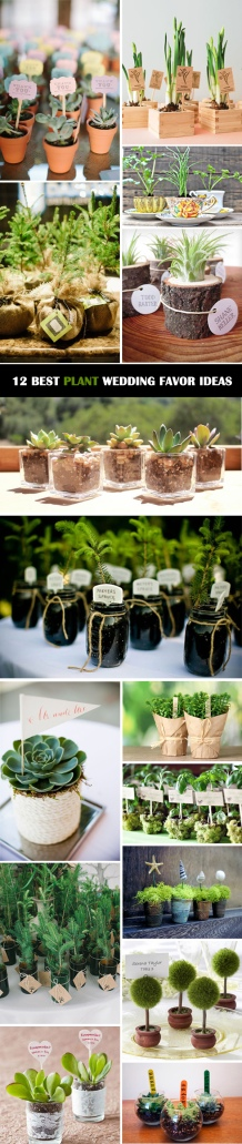 12-ultimate-great-ideas-for-lovely-plant-wedding-favors