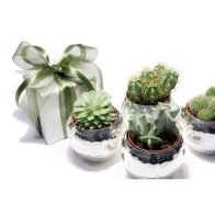 bomboniere-piante-grasse_o3