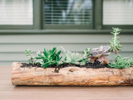 bpf_spring-house_interior_succulent-log_cover_h-jpg-rend-hgtvcom-966-725