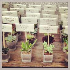 piante-grasse-bomboniere_ng3