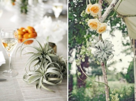 wedding-air-plants
